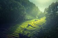 Vietnam Rice fields on terraced 11098078471| 写真素材・ストックフォト・画像・イラスト素材|アマナイメージズ