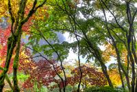 Fall Color Change at Portland Japanese Garden 11098078583| 写真素材・ストックフォト・画像・イラスト素材|アマナイメージズ