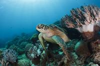 Reef life 11098078748  写真素材・ストックフォト・画像・イラスト素材 アマナイメージズ