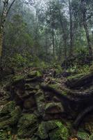The secrets of nature.. 11098079041| 写真素材・ストックフォト・画像・イラスト素材|アマナイメージズ
