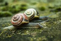 Slow race 11098079420| 写真素材・ストックフォト・画像・イラスト素材|アマナイメージズ