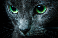 Green eyed blue 11098079428| 写真素材・ストックフォト・画像・イラスト素材|アマナイメージズ