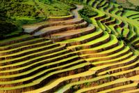 Terraced rice field in northwest vietnam 11098079524| 写真素材・ストックフォト・画像・イラスト素材|アマナイメージズ