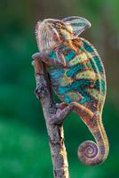 a colorful bird 11098079654| 写真素材・ストックフォト・画像・イラスト素材|アマナイメージズ