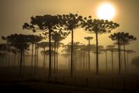 Sunrise in the mountains 11098079791| 写真素材・ストックフォト・画像・イラスト素材|アマナイメージズ
