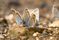 Butterflies 11098079808| 写真素材・ストックフォト・画像・イラスト素材|アマナイメージズ