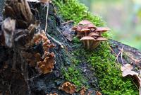 Mushrooms 2 11098080173| 写真素材・ストックフォト・画像・イラスト素材|アマナイメージズ