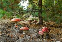 Forest Dwellers 11098080215| 写真素材・ストックフォト・画像・イラスト素材|アマナイメージズ
