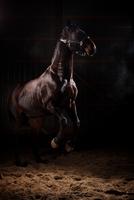 Studio Horses 11098080252| 写真素材・ストックフォト・画像・イラスト素材|アマナイメージズ