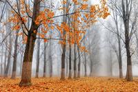 Heralds Of Autumn 11098080284| 写真素材・ストックフォト・画像・イラスト素材|アマナイメージズ