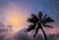 Dreaming Of Warmer Climes 11098080471| 写真素材・ストックフォト・画像・イラスト素材|アマナイメージズ
