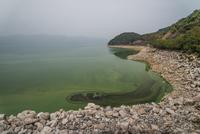 Algae pool 11098080488| 写真素材・ストックフォト・画像・イラスト素材|アマナイメージズ
