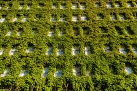 Vertical garden on wall 11098080521| 写真素材・ストックフォト・画像・イラスト素材|アマナイメージズ