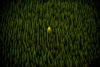 Alone 11098080823| 写真素材・ストックフォト・画像・イラスト素材|アマナイメージズ