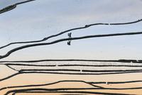 Flooded rice paddies at sunrise 11098080978| 写真素材・ストックフォト・画像・イラスト素材|アマナイメージズ