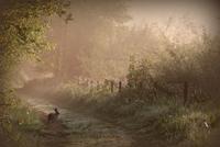 Hare 11098081025| 写真素材・ストックフォト・画像・イラスト素材|アマナイメージズ