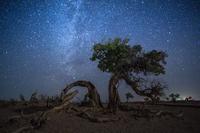 Giant Tree Under the Milky Way 11098081134| 写真素材・ストックフォト・画像・イラスト素材|アマナイメージズ