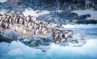 Ice Swimmers 11098081486  写真素材・ストックフォト・画像・イラスト素材 アマナイメージズ