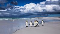 A few penguins 11098081608| 写真素材・ストックフォト・画像・イラスト素材|アマナイメージズ
