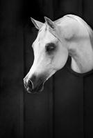 Horse 11098081669| 写真素材・ストックフォト・画像・イラスト素材|アマナイメージズ