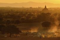 Life in Bagan, Myanmar 11098081812| 写真素材・ストックフォト・画像・イラスト素材|アマナイメージズ