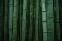 Green 11098081980| 写真素材・ストックフォト・画像・イラスト素材|アマナイメージズ