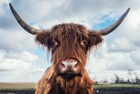 Faces of Denmark 11098082029| 写真素材・ストックフォト・画像・イラスト素材|アマナイメージズ