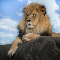 Majestic 11098082059  写真素材・ストックフォト・画像・イラスト素材 アマナイメージズ