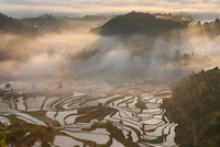 Rice fields on terraced in sunrise