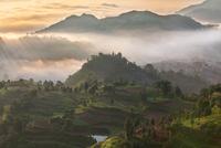 Rice fields on terraced in sunrise 11098082222| 写真素材・ストックフォト・画像・イラスト素材|アマナイメージズ