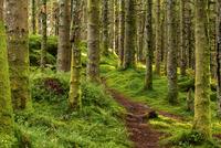 Trail in the Forest 11098082338| 写真素材・ストックフォト・画像・イラスト素材|アマナイメージズ
