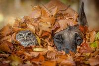 Happy Halloween 11098082367  写真素材・ストックフォト・画像・イラスト素材 アマナイメージズ