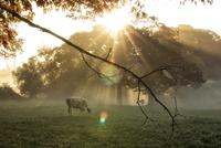 early morning scenes 11098082379| 写真素材・ストックフォト・画像・イラスト素材|アマナイメージズ