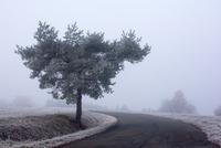 Cold morning 11098082401| 写真素材・ストックフォト・画像・イラスト素材|アマナイメージズ