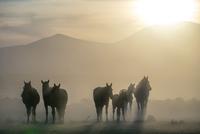 Horses 11098082428  写真素材・ストックフォト・画像・イラスト素材 アマナイメージズ