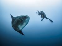 Mola Moment 11098082447| 写真素材・ストックフォト・画像・イラスト素材|アマナイメージズ