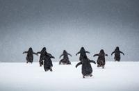 Penguin Lanes 11098082527| 写真素材・ストックフォト・画像・イラスト素材|アマナイメージズ