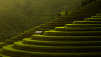 Rice Terraces 11098082549| 写真素材・ストックフォト・画像・イラスト素材|アマナイメージズ