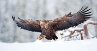 Powerful Bird 11098082596| 写真素材・ストックフォト・画像・イラスト素材|アマナイメージズ