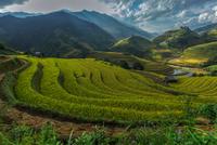 Rice fields on terraced of Mu Cang Chai, YenBai, Vietnam. Rice fields prepare the harvest at Northwe 11098082676| 写真素材・ストックフォト・画像・イラスト素材|アマナイメージズ