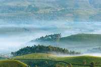Morning fog covers trees on the mountain hills in India. 11098082747| 写真素材・ストックフォト・画像・イラスト素材|アマナイメージズ