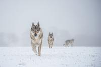 The pack 11098082888| 写真素材・ストックフォト・画像・イラスト素材|アマナイメージズ