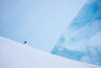 Peeking Penguin 11098082923| 写真素材・ストックフォト・画像・イラスト素材|アマナイメージズ