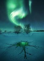 Emerald Shades 11098083021| 写真素材・ストックフォト・画像・イラスト素材|アマナイメージズ