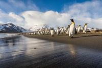 Morning Stroll on the Beach 11098083053| 写真素材・ストックフォト・画像・イラスト素材|アマナイメージズ