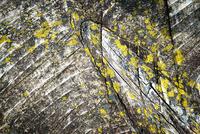 detail wooden plank overgrown with moss 11098087591| 写真素材・ストックフォト・画像・イラスト素材|アマナイメージズ