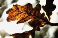 116.tif 11099001719| 写真素材・ストックフォト・画像・イラスト素材|アマナイメージズ