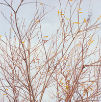 07.tif 11099002580| 写真素材・ストックフォト・画像・イラスト素材|アマナイメージズ