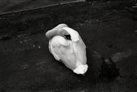 02 swan.tif