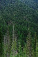 SNG-Trees2.tif